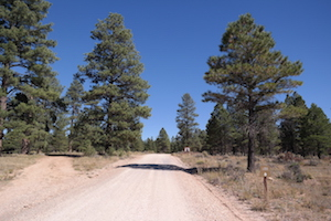 Forest Road 688 Dispersed Camping thumb