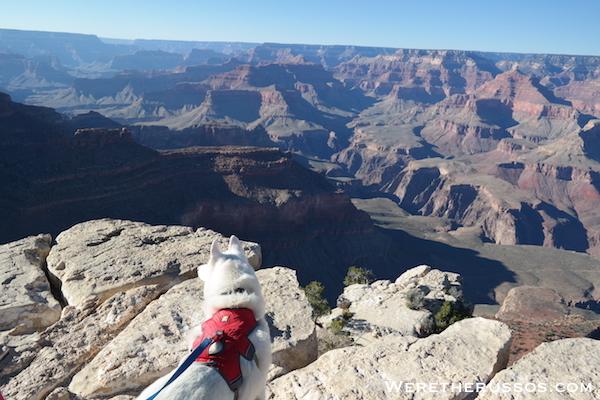 Grand Canyon South Rim Leo