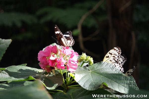 Butterfly Rainforest Florida