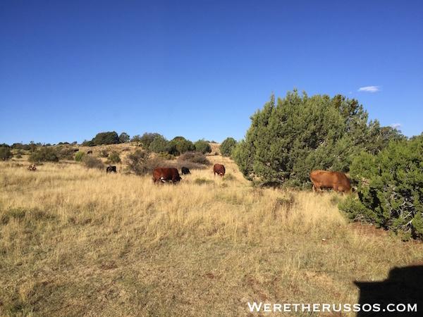 Free RV camping Flagstaff AZ 2
