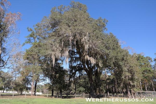 Travelers Campground Alachua Florida trees