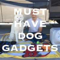 Must have dog gadgets